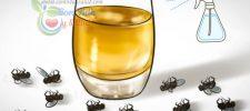 Rocía esto y en dos horas no habrá 1 sola mosca, ni cucarachas, ni mosquitos! Desaparecen para siempre de tu casa!